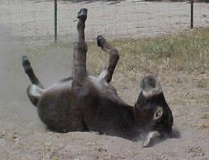 6ece5-donkey