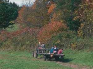 Tractor in fall field