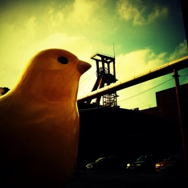canary_in_a_coal_mine