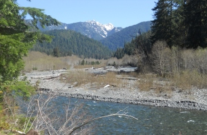 Quinault river 1